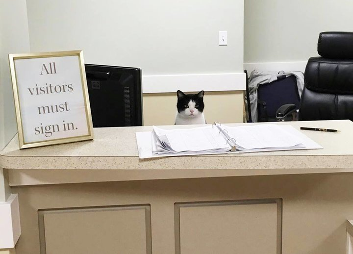 grumpy cat cheers up nursing home residents